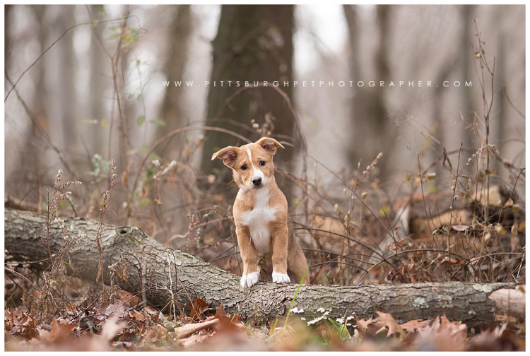 puppy-photos-pittsburgh-professional-dog-pictures-photographer-pittsburgh-pet-photographer-robinson-pa-settlers-cabin-park3